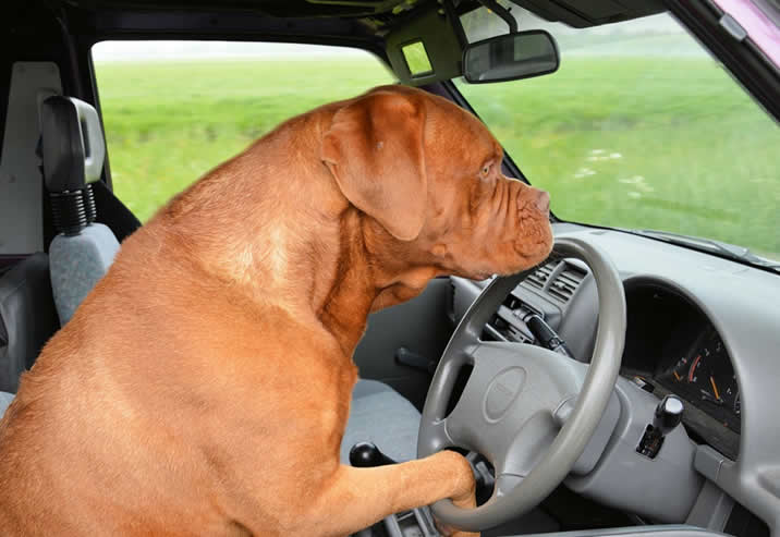 Weird and unusual driving offences and laws